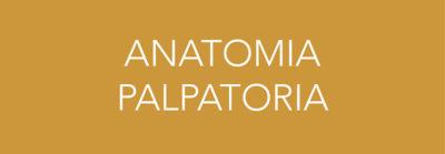 anatomia palpatoria